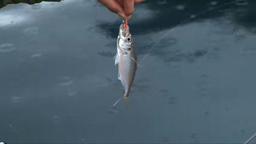 アジ釣り ポイント